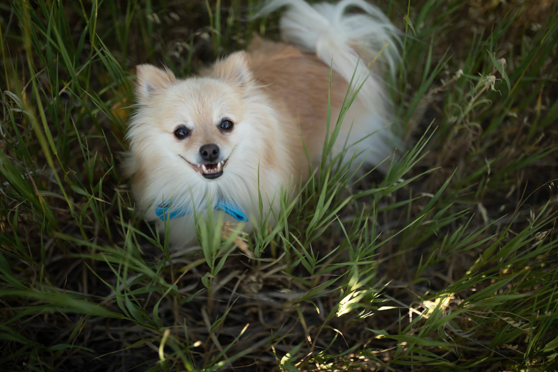 Dog Portraits Engagements Weddings Snow Basin Faces Photography