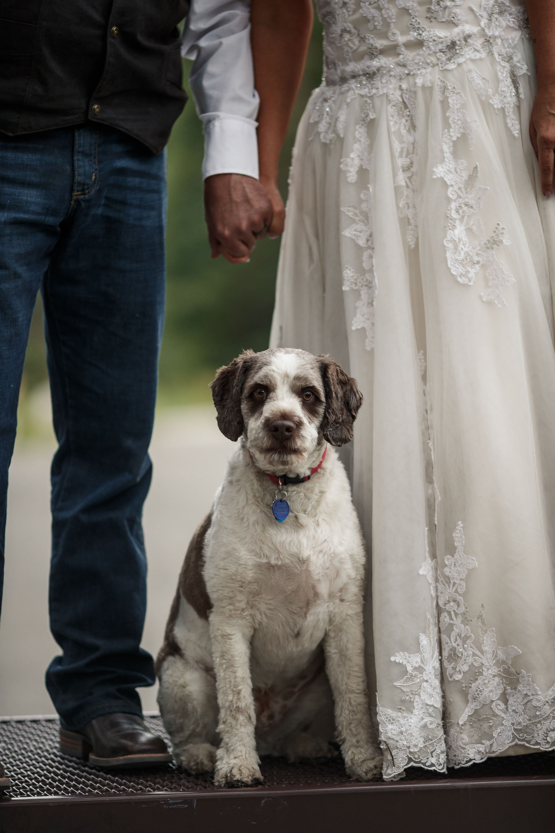 Dog Portraits at Wedding Faces Photography