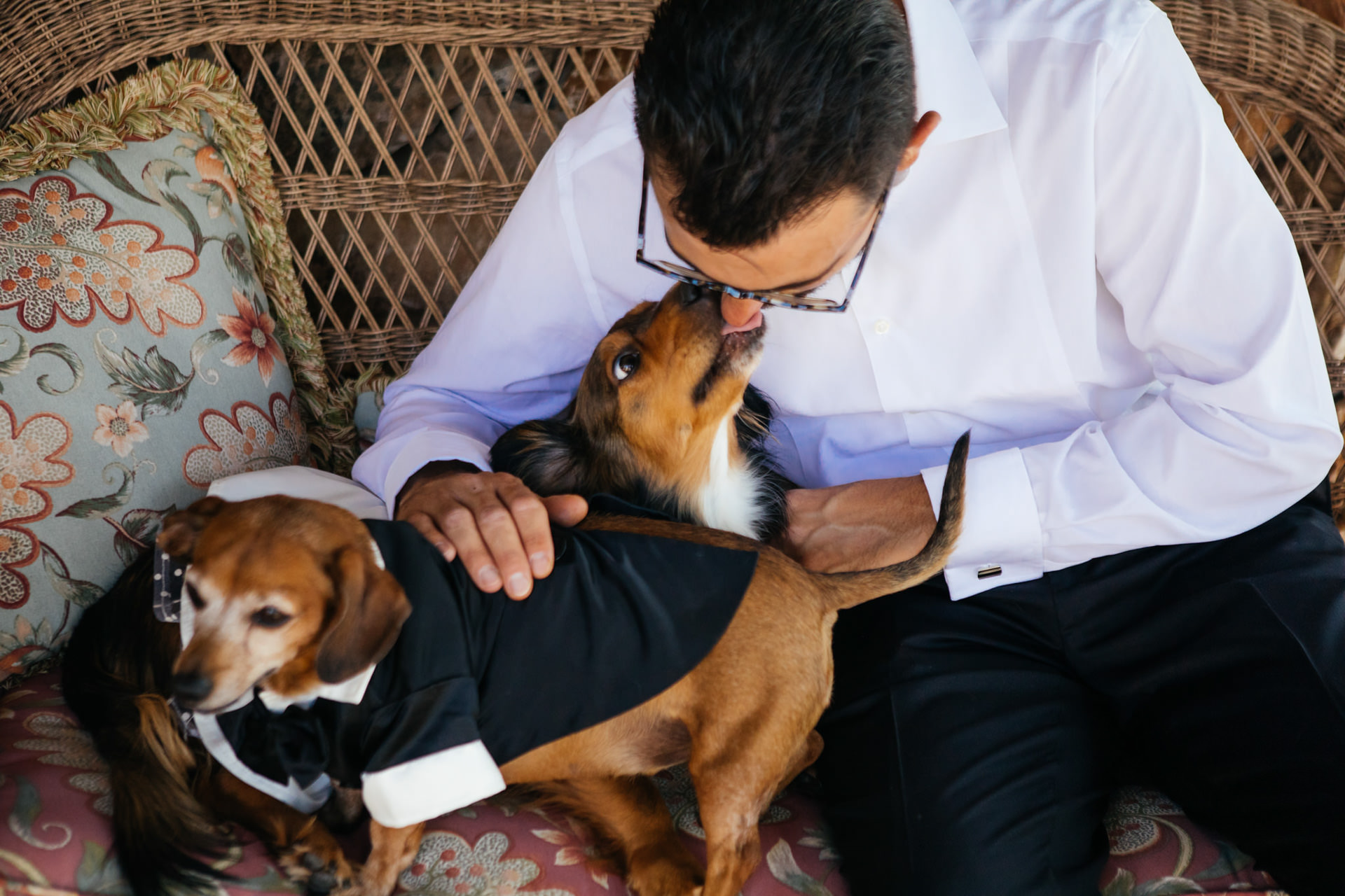 Dogs in Wedding Clothes Faces Photography