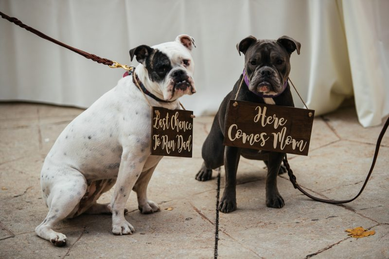 Wedding Dogs Walk down aisle Faces Photography