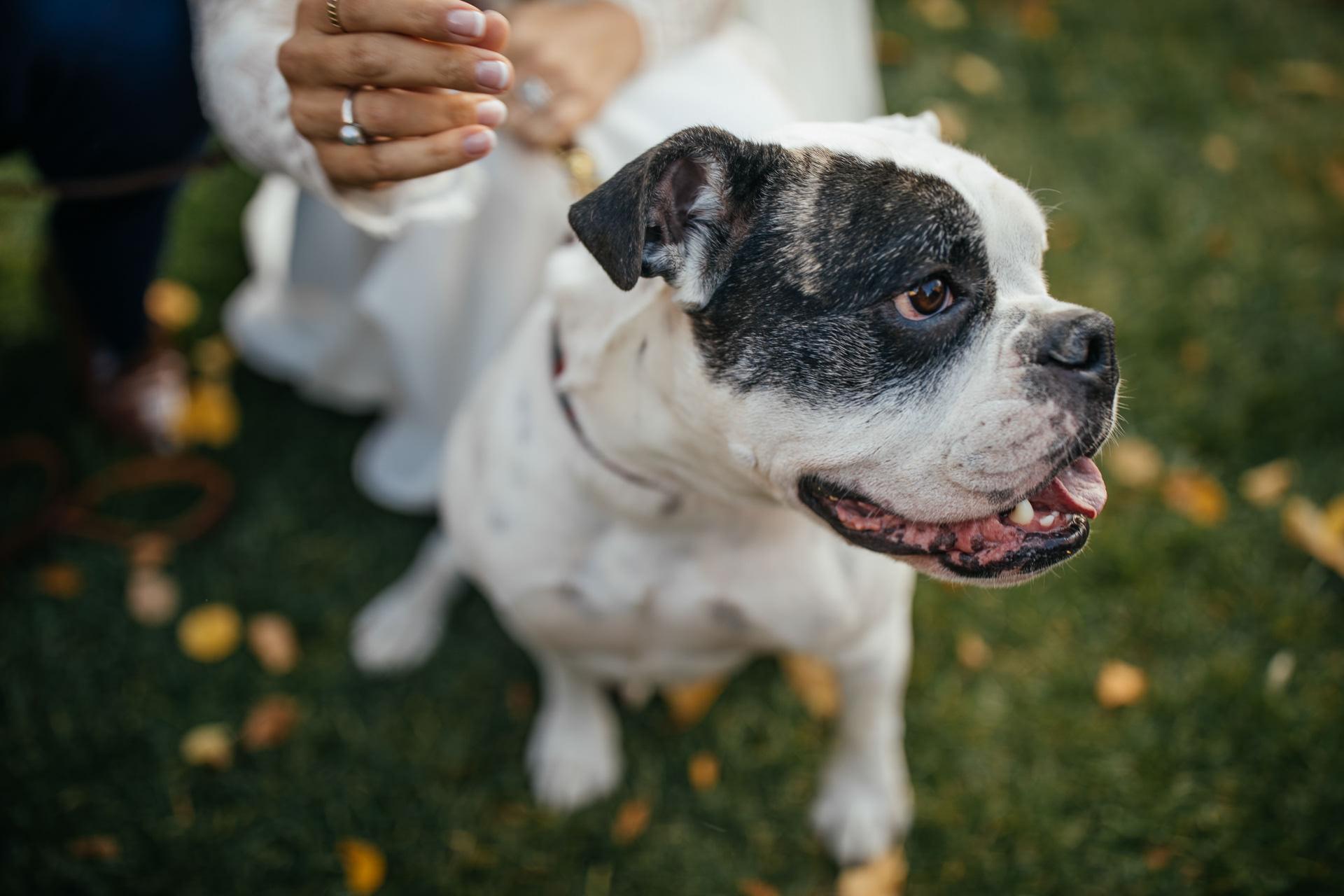 Dog Portraits Wedding Faces Photography
