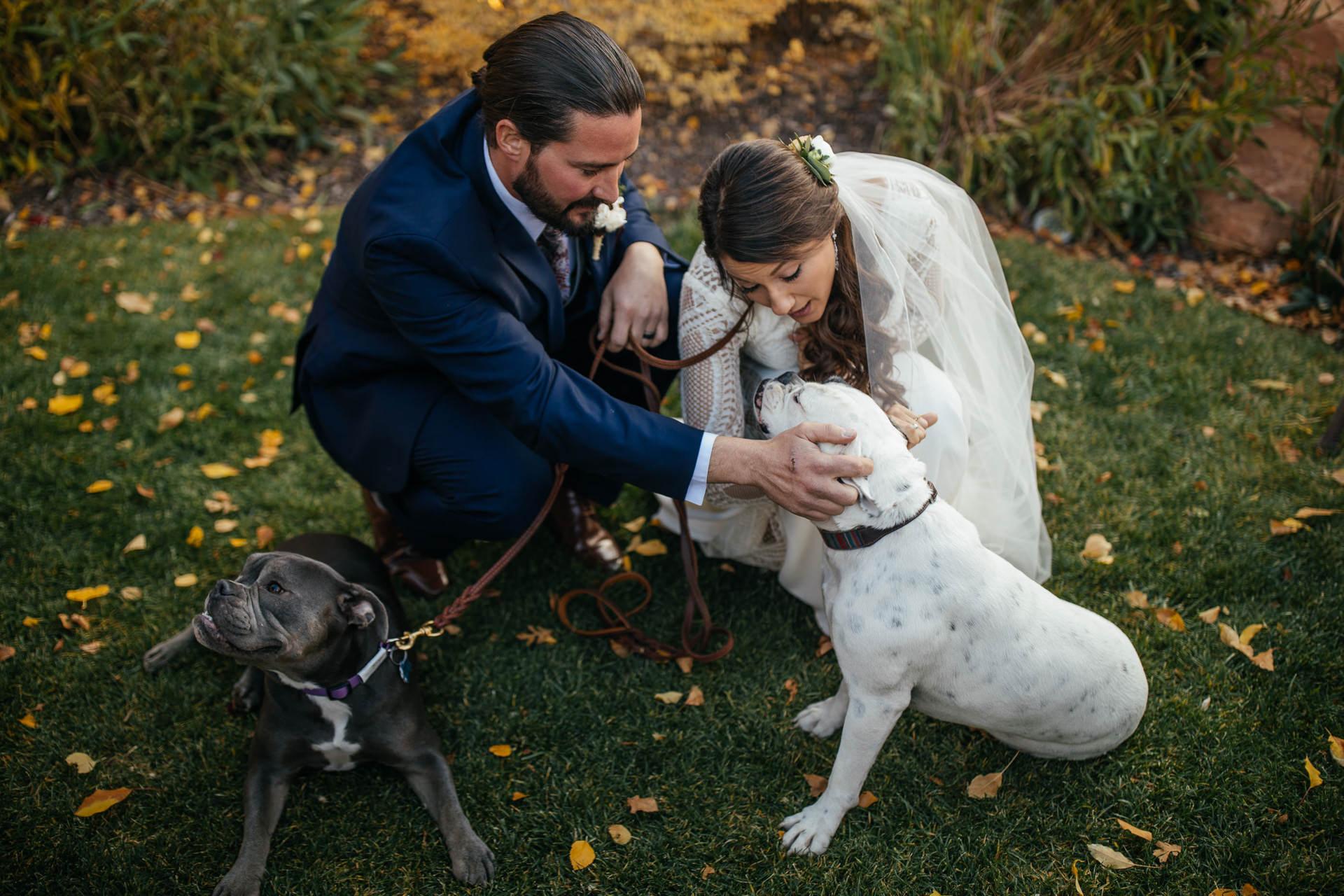 Louland Falls pet friendly wedding venue