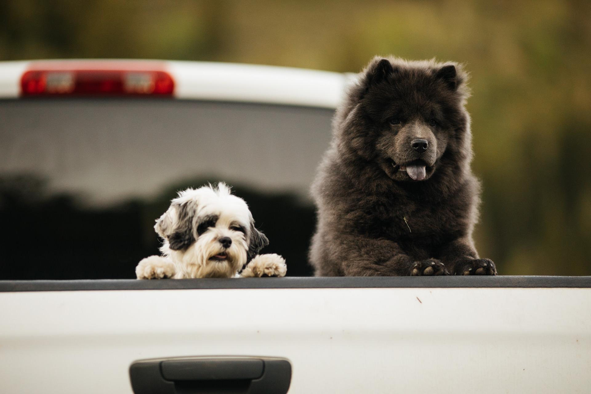 Dog Portraits Weddings Engagements Faces Photography
