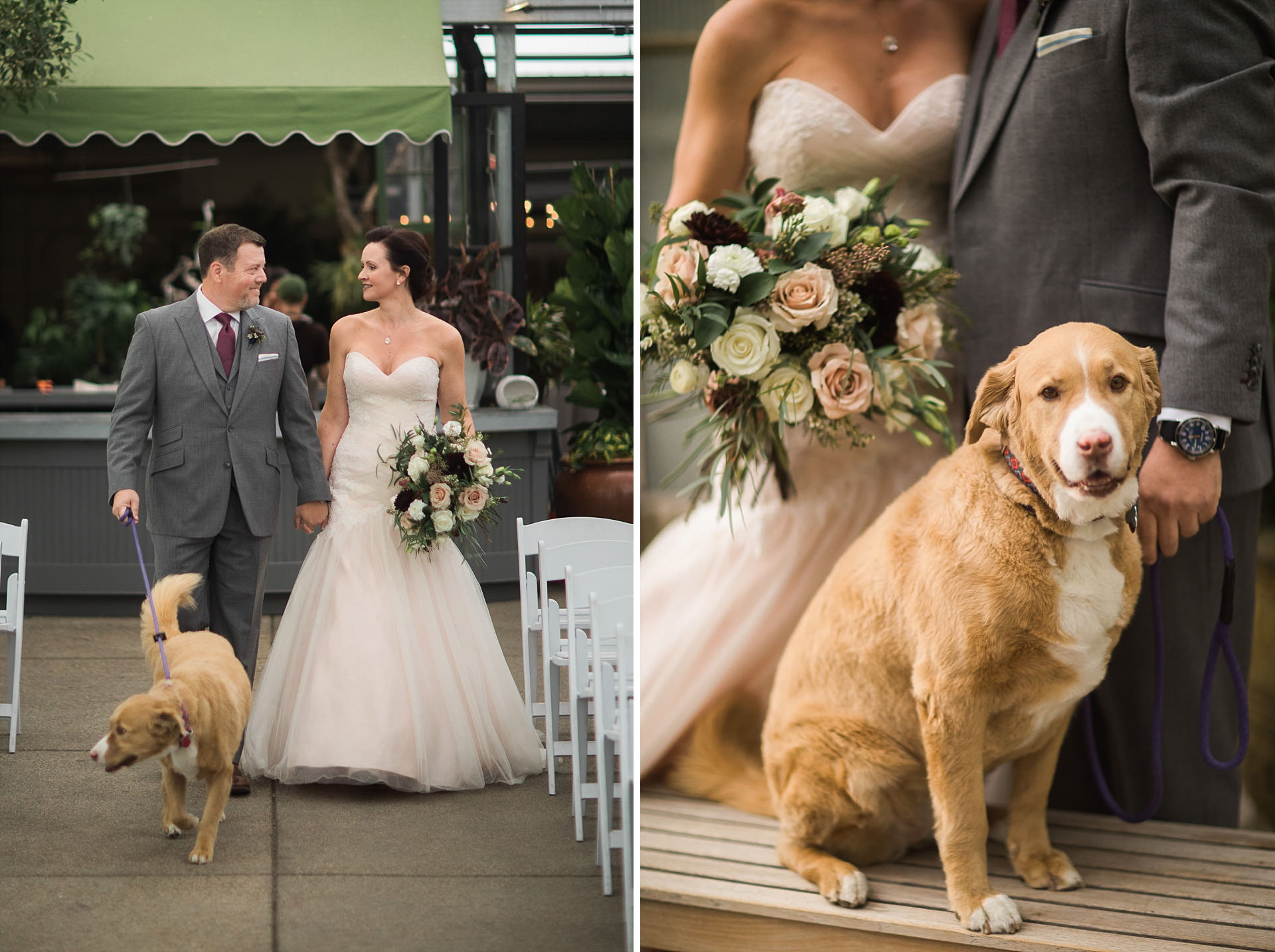 Wedding Dogs Cactus and Tropicals Faces Photography