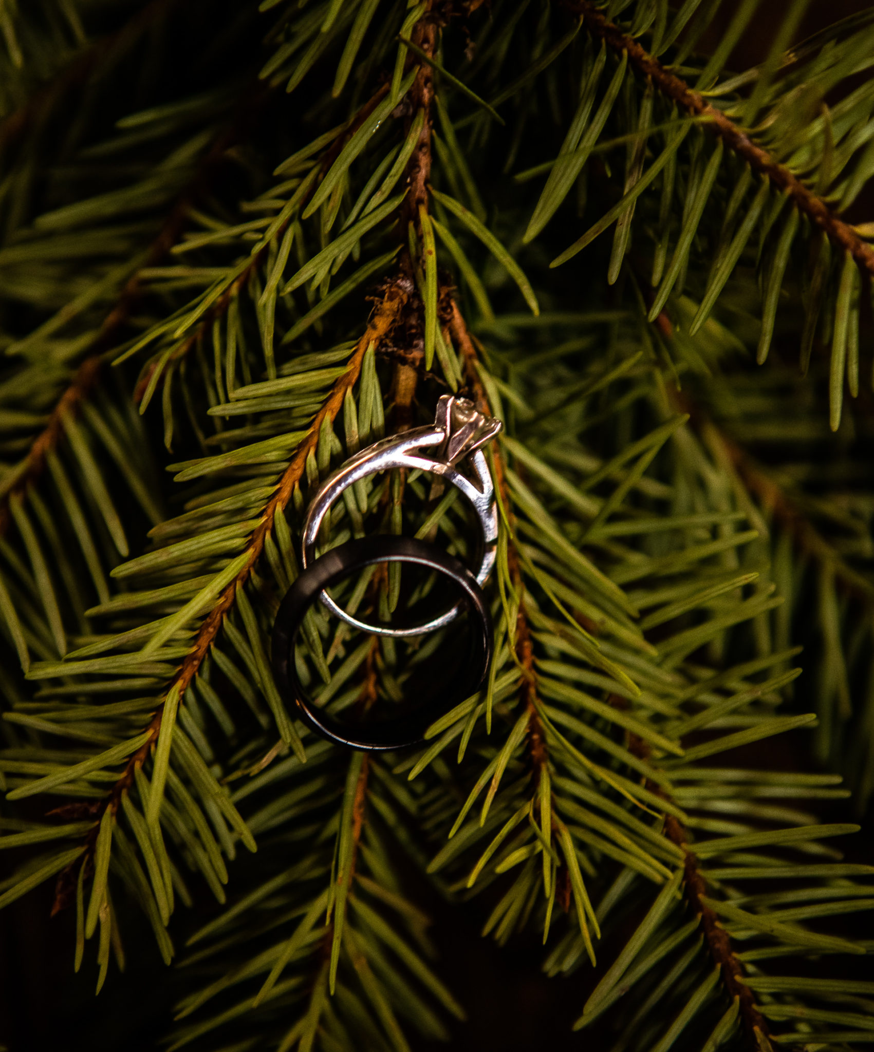 Knot and Pine Ring Shots